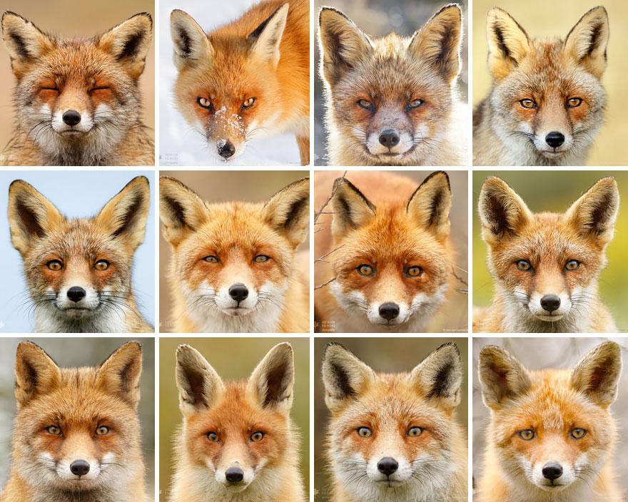 fox-faces-roeselien-raimond-portraits