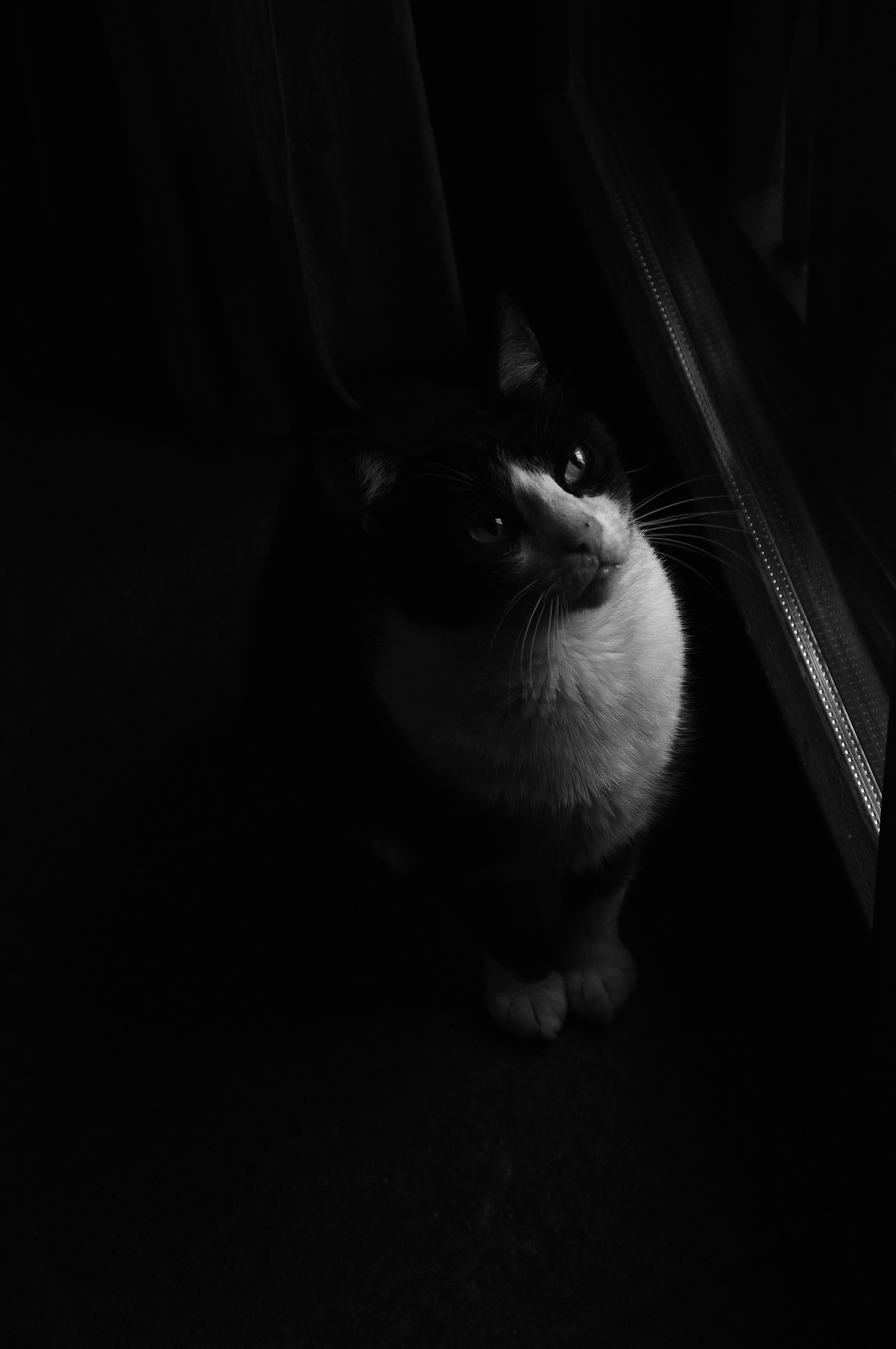 dark-cat-on-black