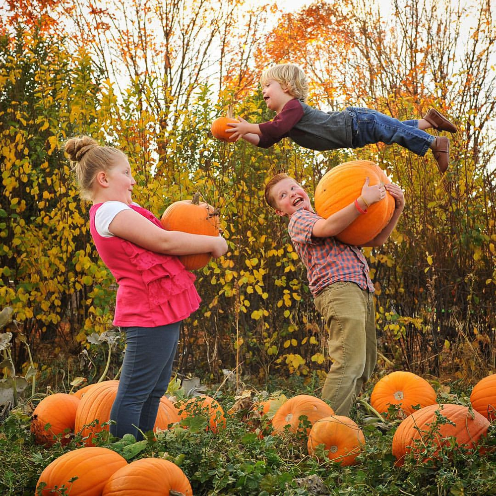 Wil Can Fly - Pumpkins
