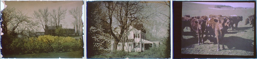 Title from left to right: House behind bare trees, Side view of a two-story house with white planking and black shutters and a porch, Herd of cattle