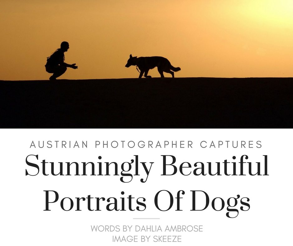 Amazing Photographs Of Dogs