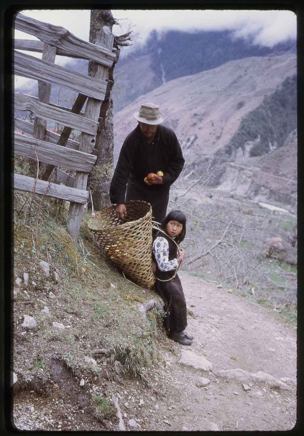 Man putting apples into basket which is on a girl's back, Lachung, Sikkim