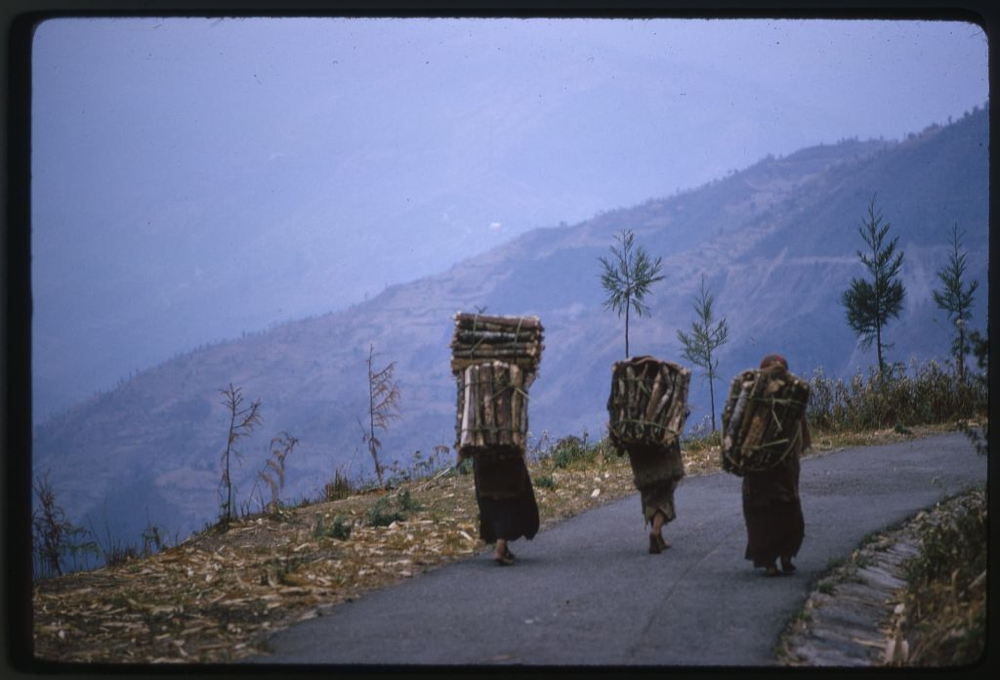 People carrying wood on their backs as they walk along a mountain road, Lachung, Sikkim