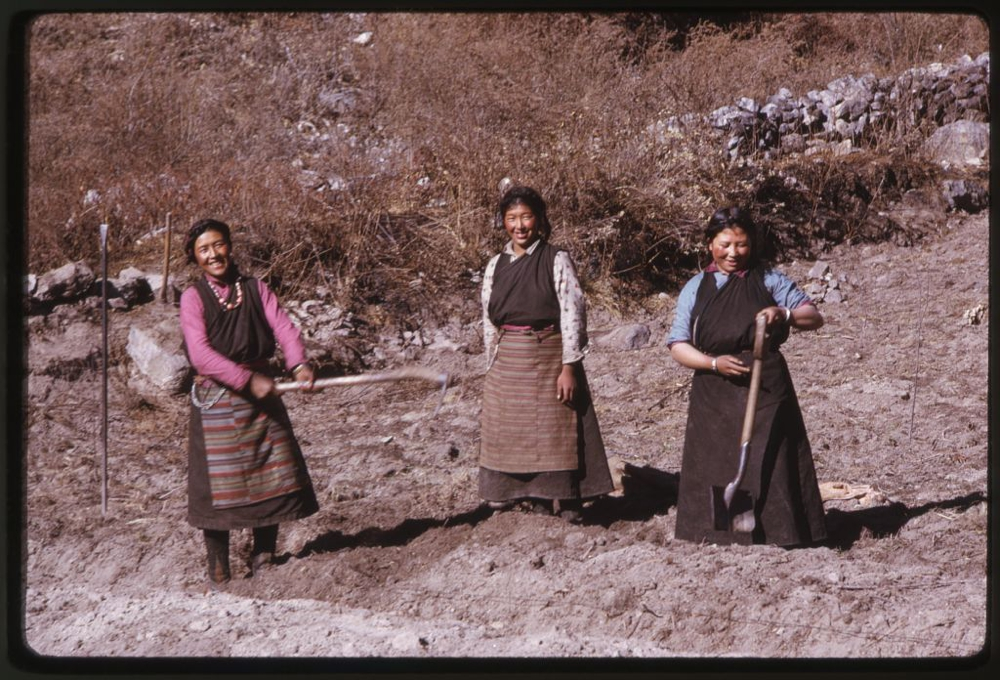 Three women standing, with farming implements in field, Lachung, Sikkim