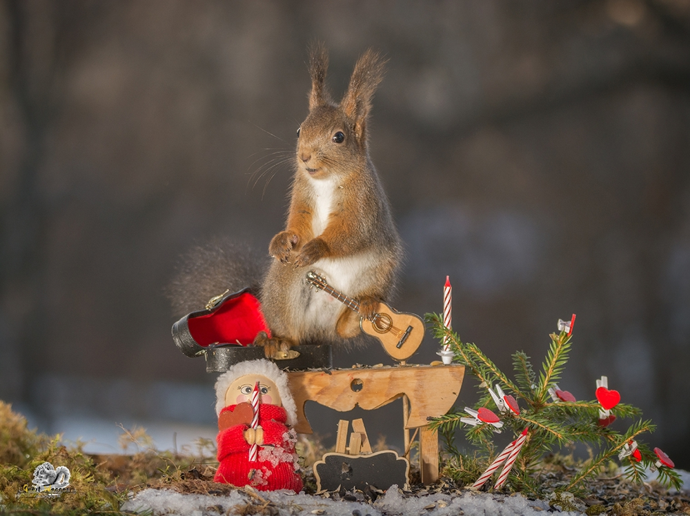 red squirrel standing with a guitar , christmas doll and candles