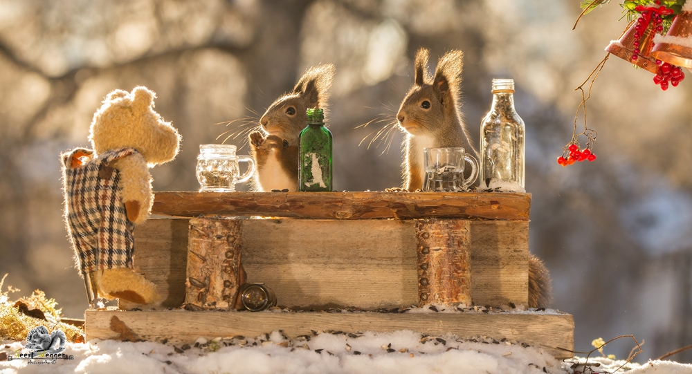 red squirrels in snow with bottles and bar with a bear