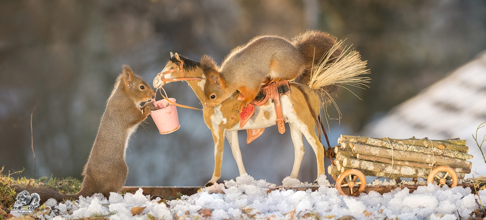 red squirrels on a horse with wagon loaded with wood in snow