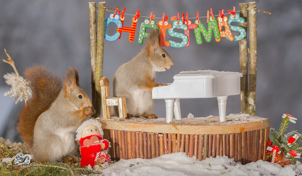 red squirrel standing on stage with a piano and word christmas while another squirrel watch