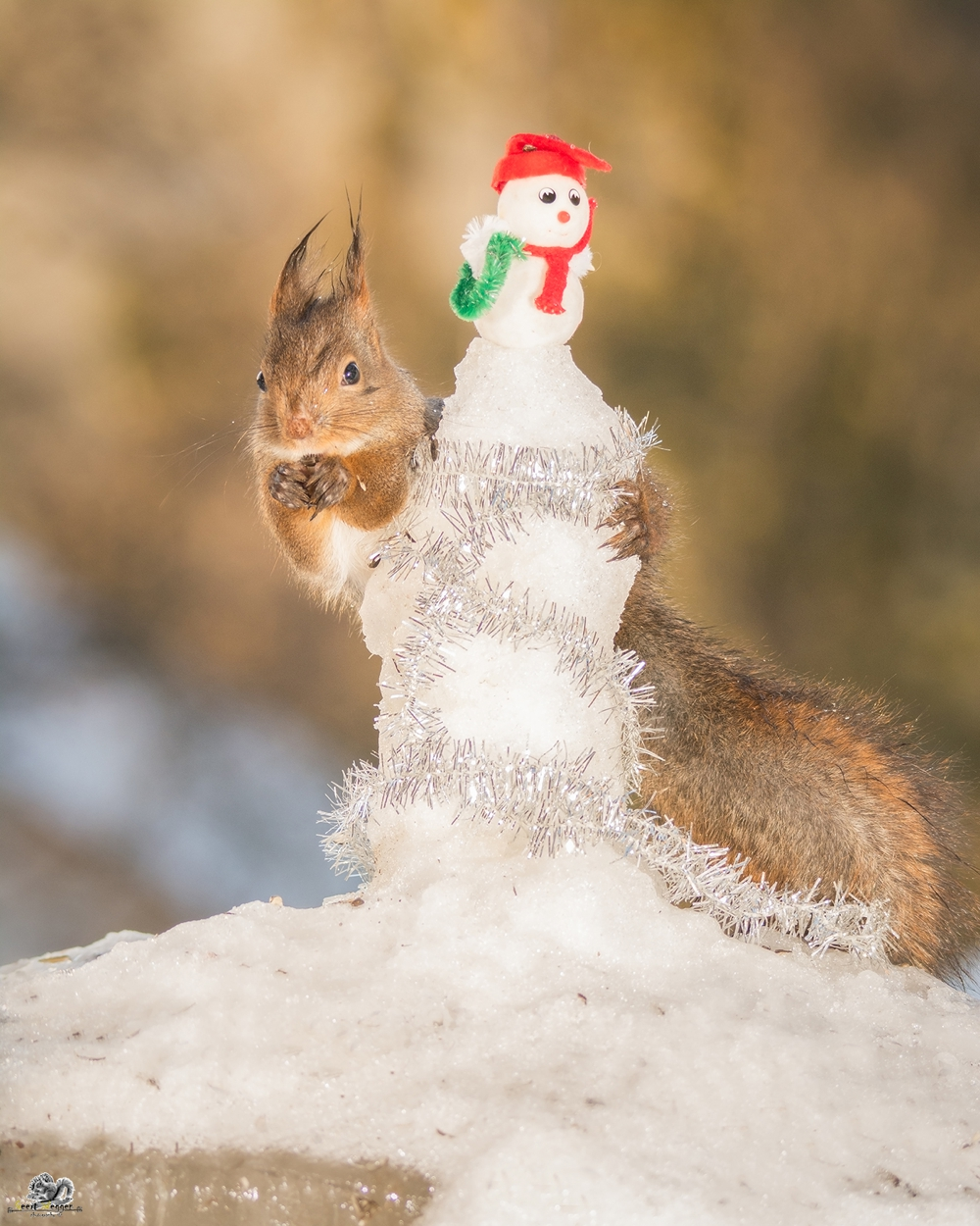 red squirrel embrace a snowman
