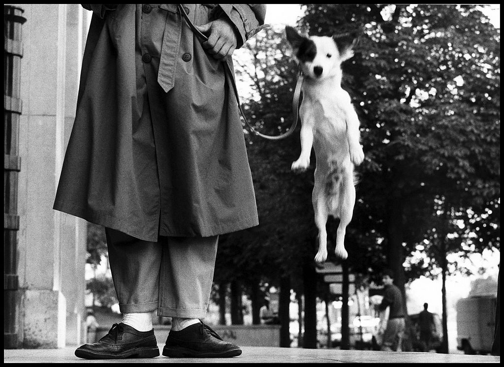Image by Elliott Erwitt wikicommons
