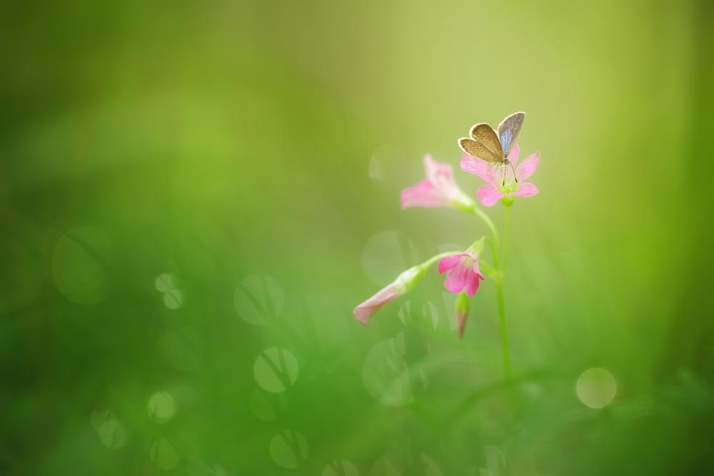 Macro_Photography_0006