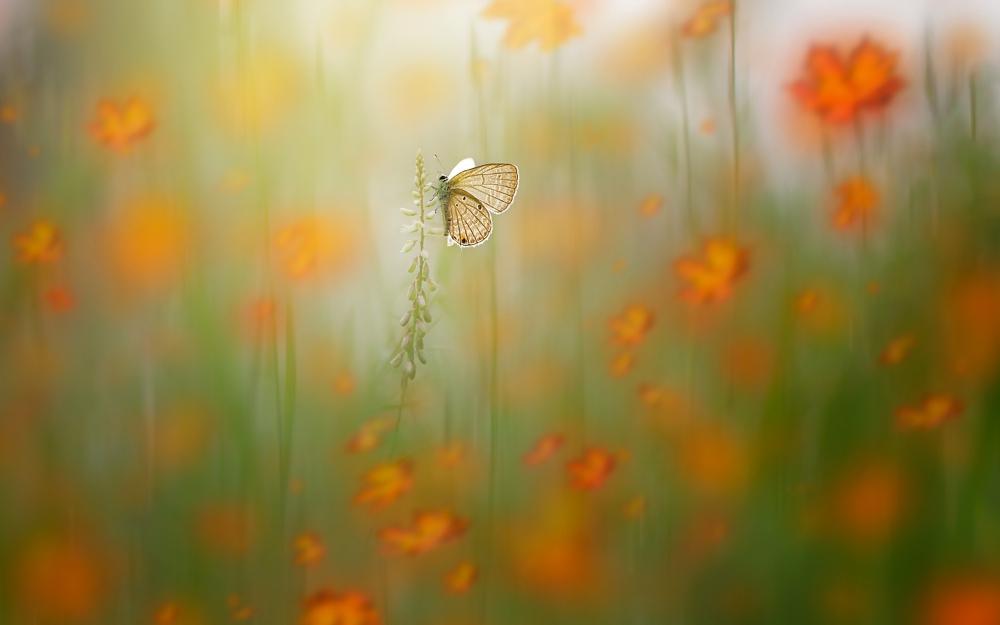Macro_Photography_0012