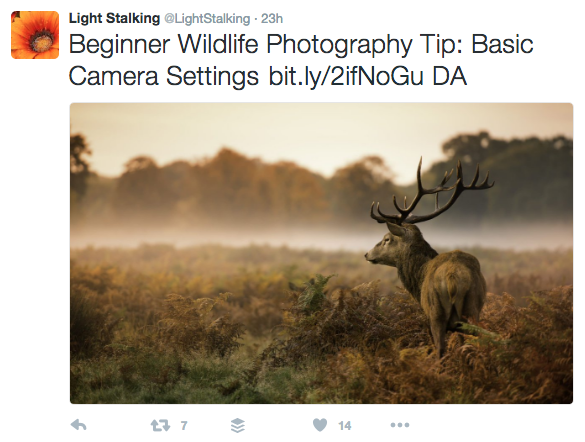 twitter for photographers