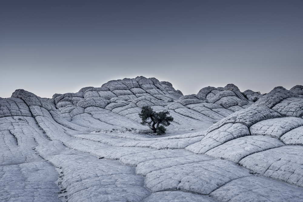 """""""Lonely Tree"""", USA"""