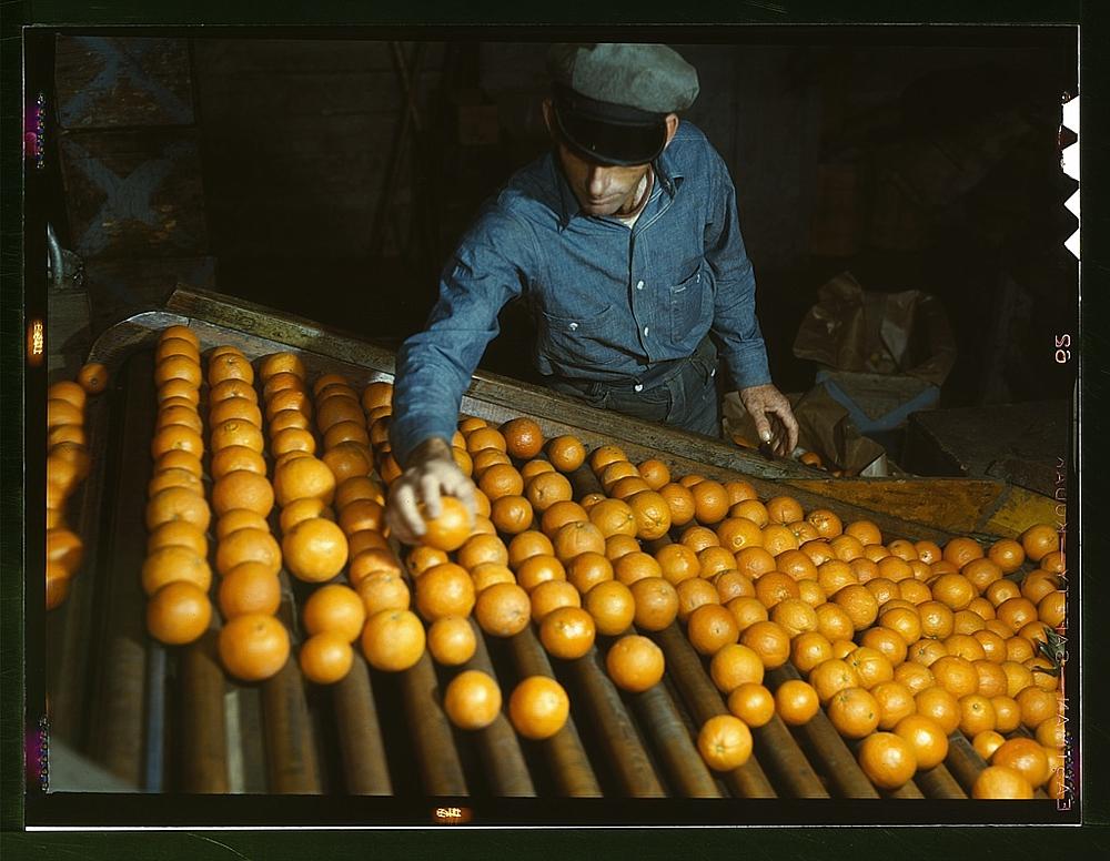 Co-op orange packing plant, Redlands