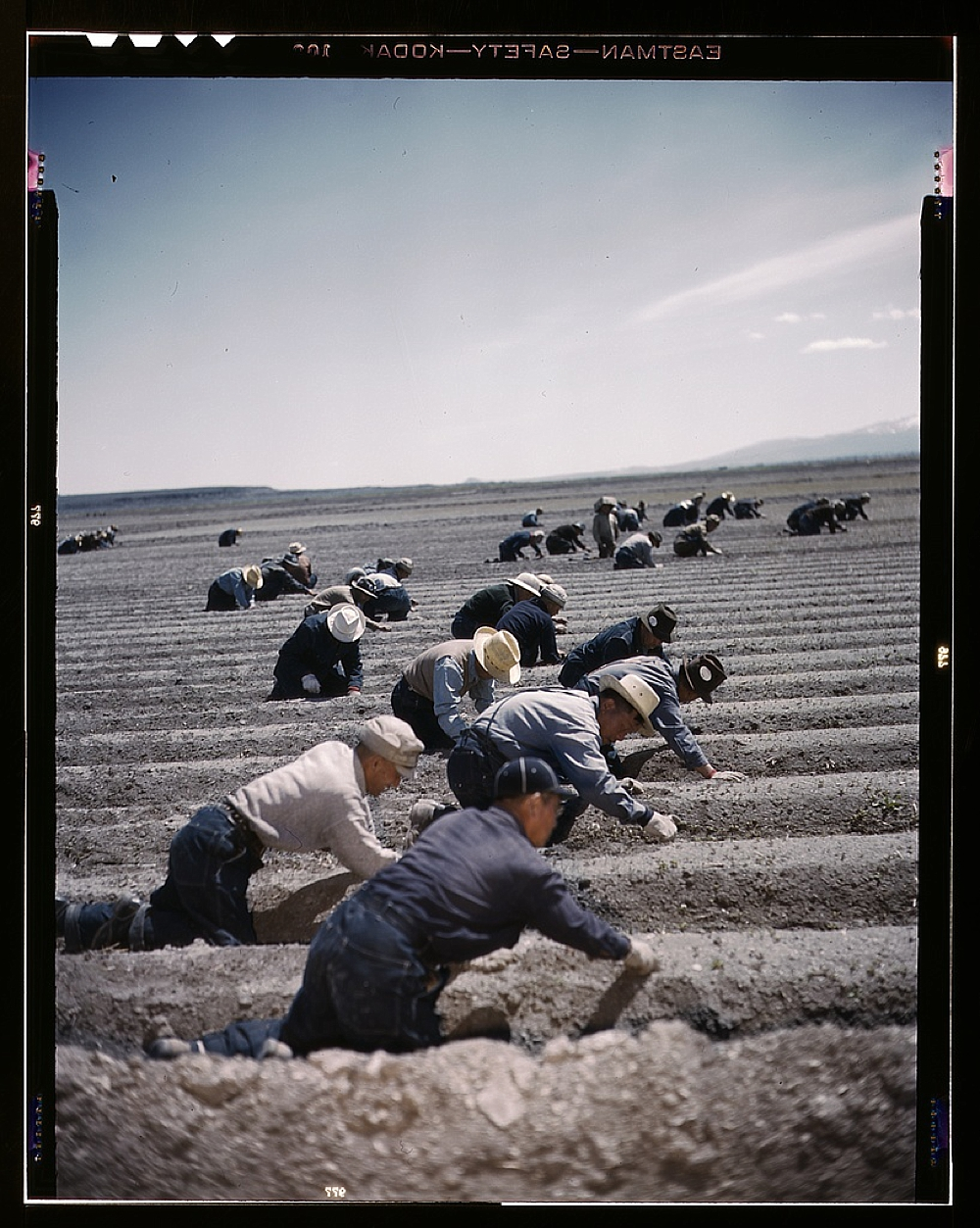 Japanese-American camp, war emergency evacuation