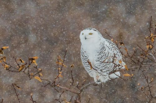 snowy in harsh conditions, emotion in photography