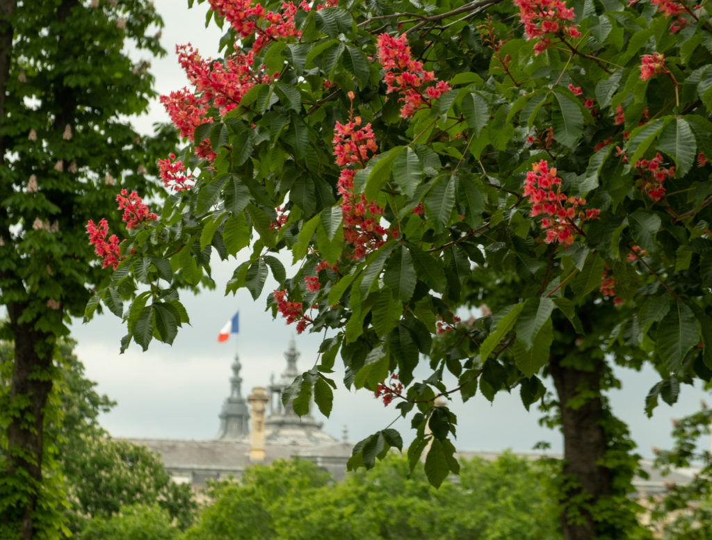 Glimpse of the ricolor flag on top of the Grand Palais in Paris.