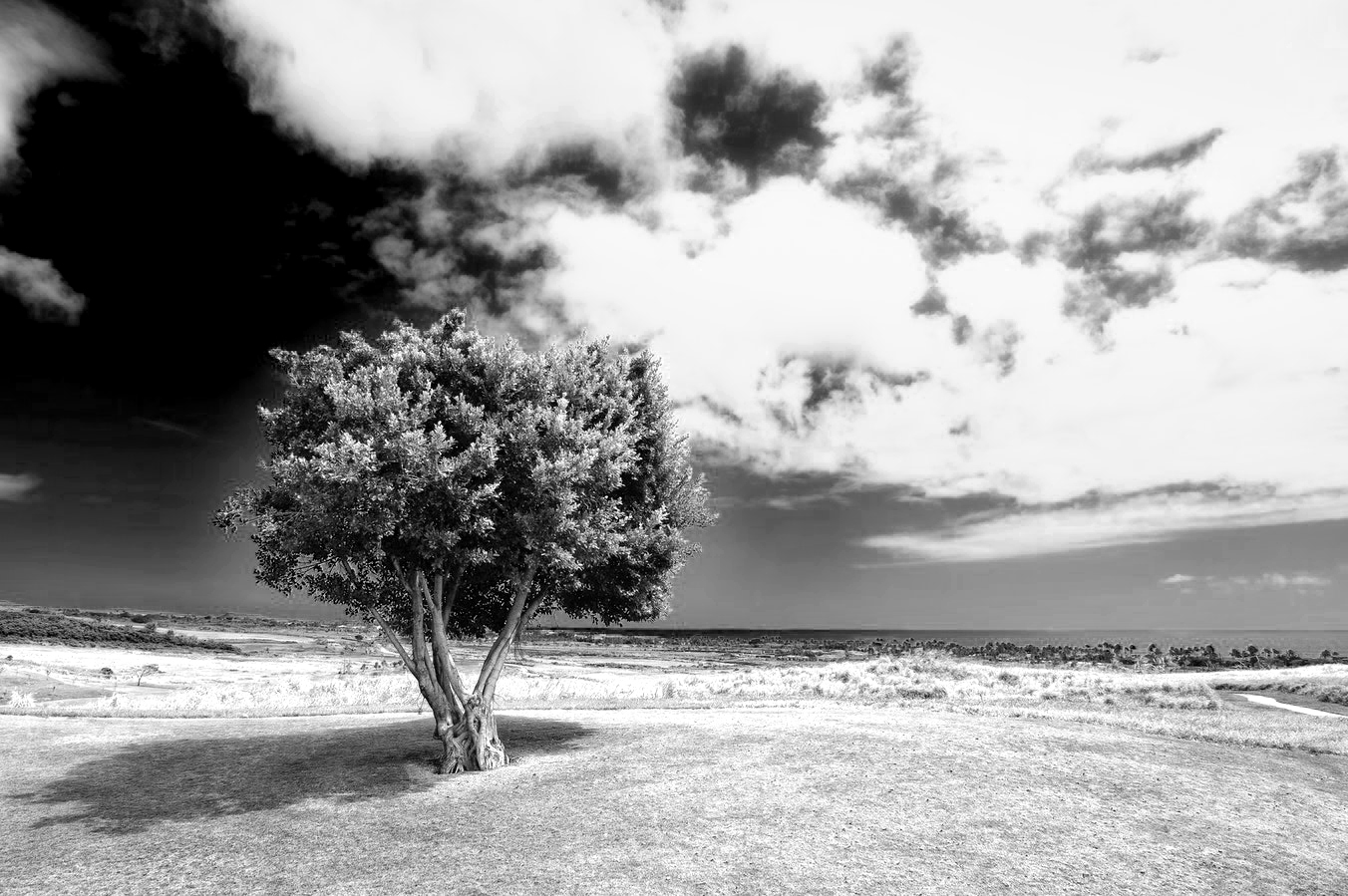 red filter for black and white photography