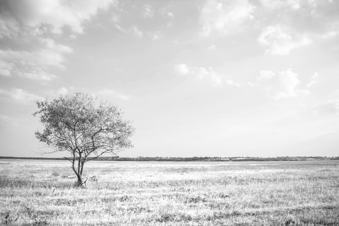 yellow filter for black and white photography