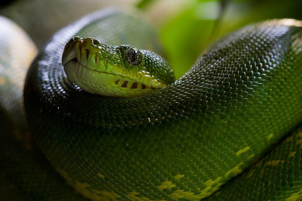 animal zoo green snake