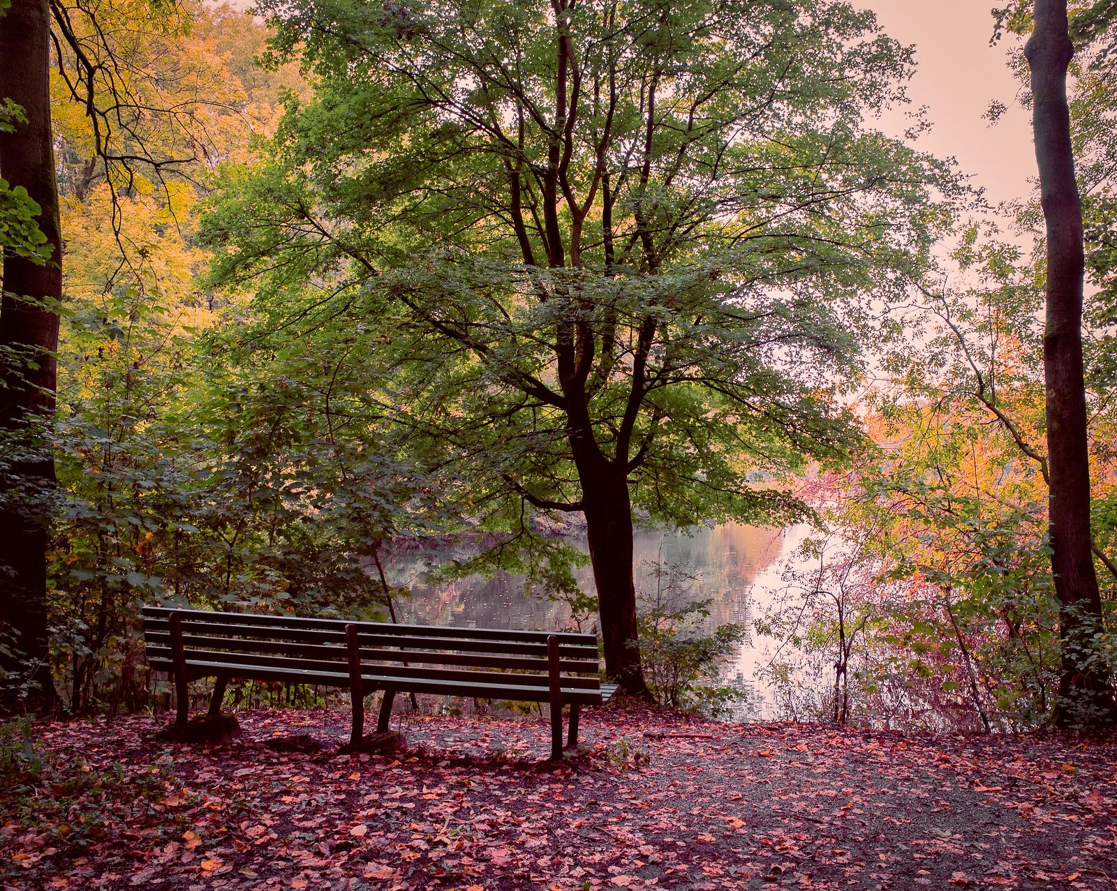 https://www.lightstalking.com/wp-content/uploads/autumn-forest.jpg