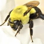 Profile picture of Bugz