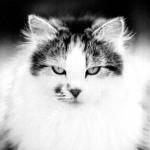 Profile picture of foxx17