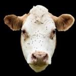 Profile picture of 3pco