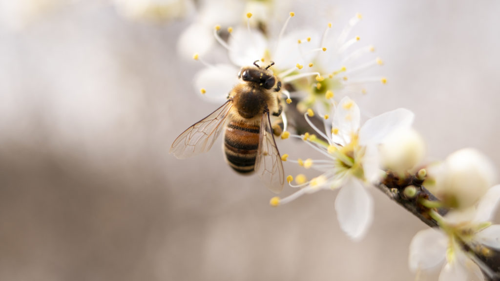 33 Beautiful Photographs Of Busy Bees