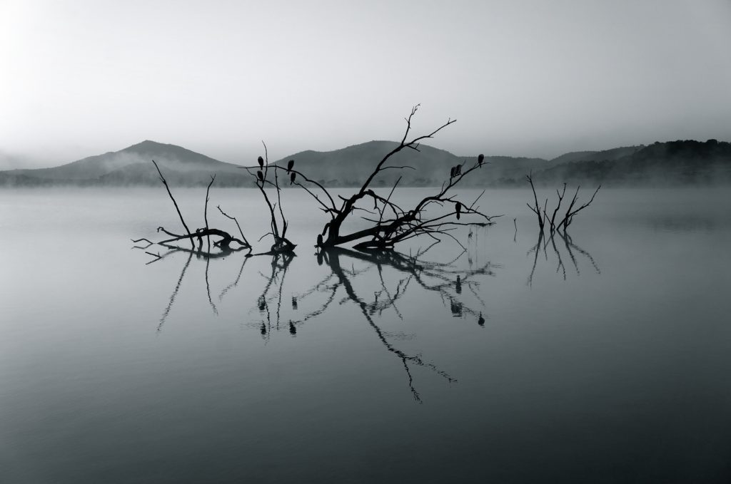 River with tree in black and white