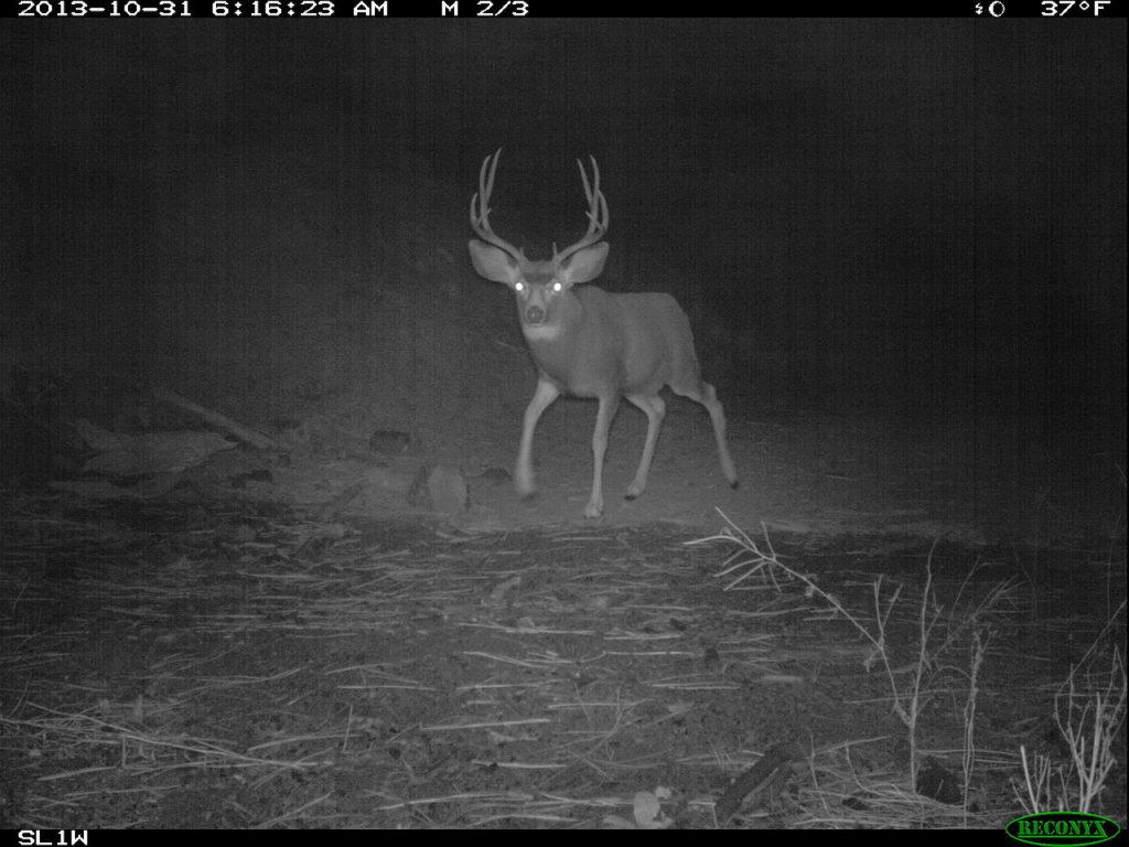 deer cam