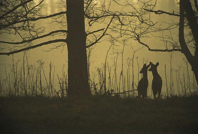 https://www.lightstalking.com/wp-content/uploads/deer-silhouette.jpg