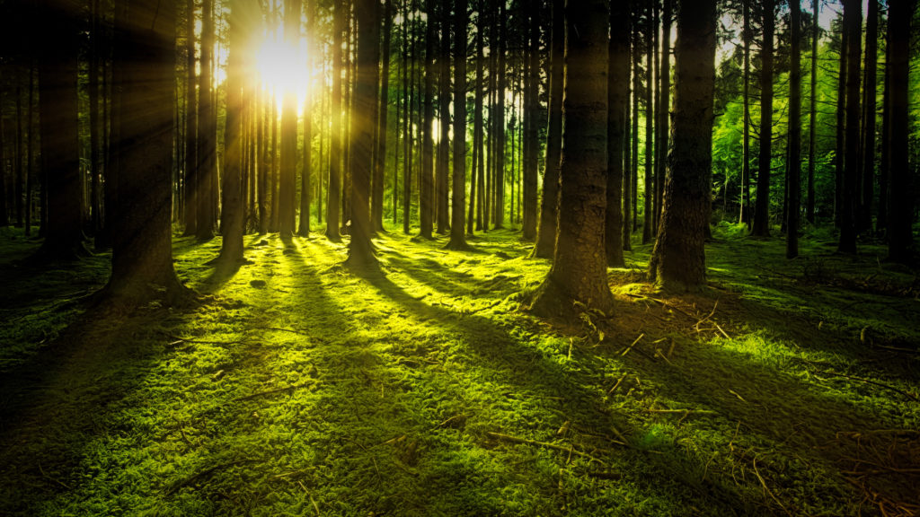 23 Images That Make Forests Look Magical | Light Stalking