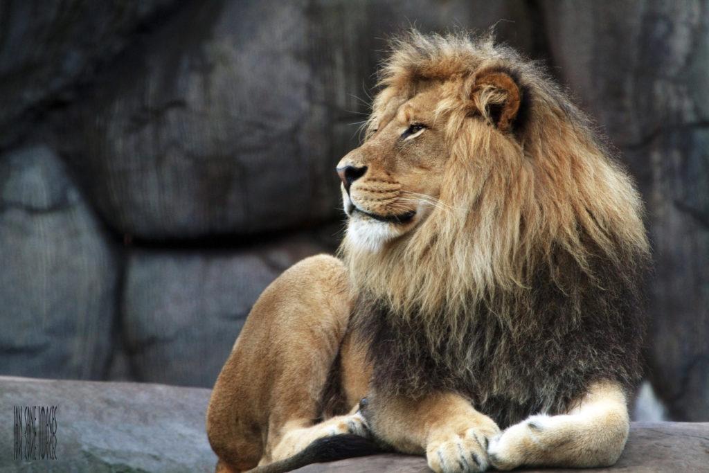 his majesty king zawadi mungu