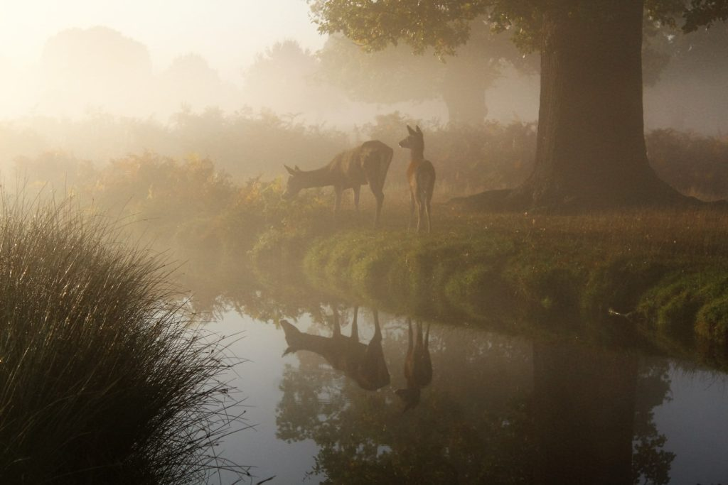 fog and mist can make the light extremely diffused, making the image soft and lacking contrast