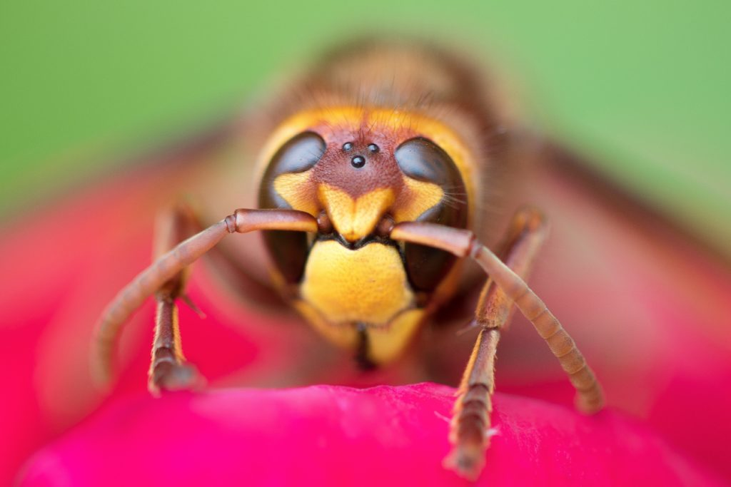 shallow focus photo of wasp