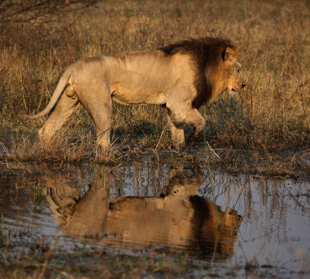 on lions pond
