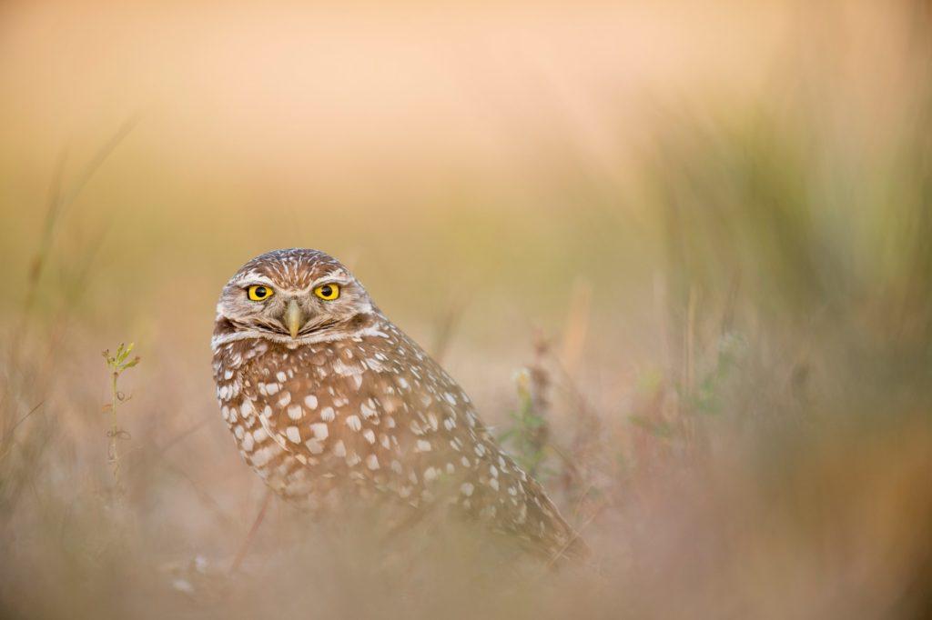 owl framed by bokeh