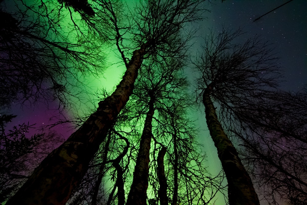 the aurora through the trees