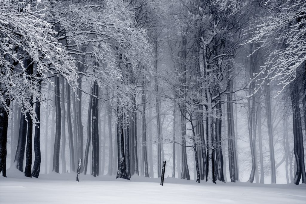 Beautiful snowy forest in black and white