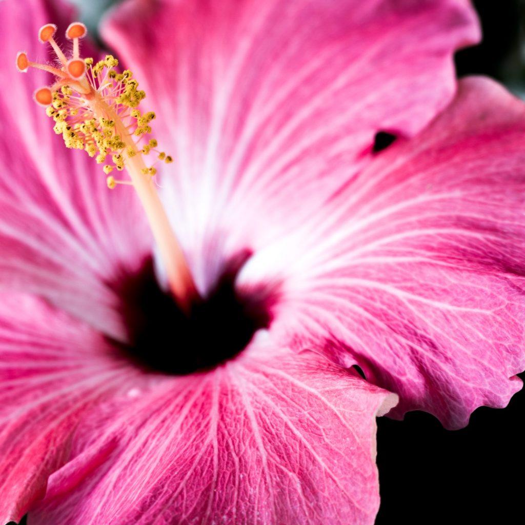 closeup photography at home