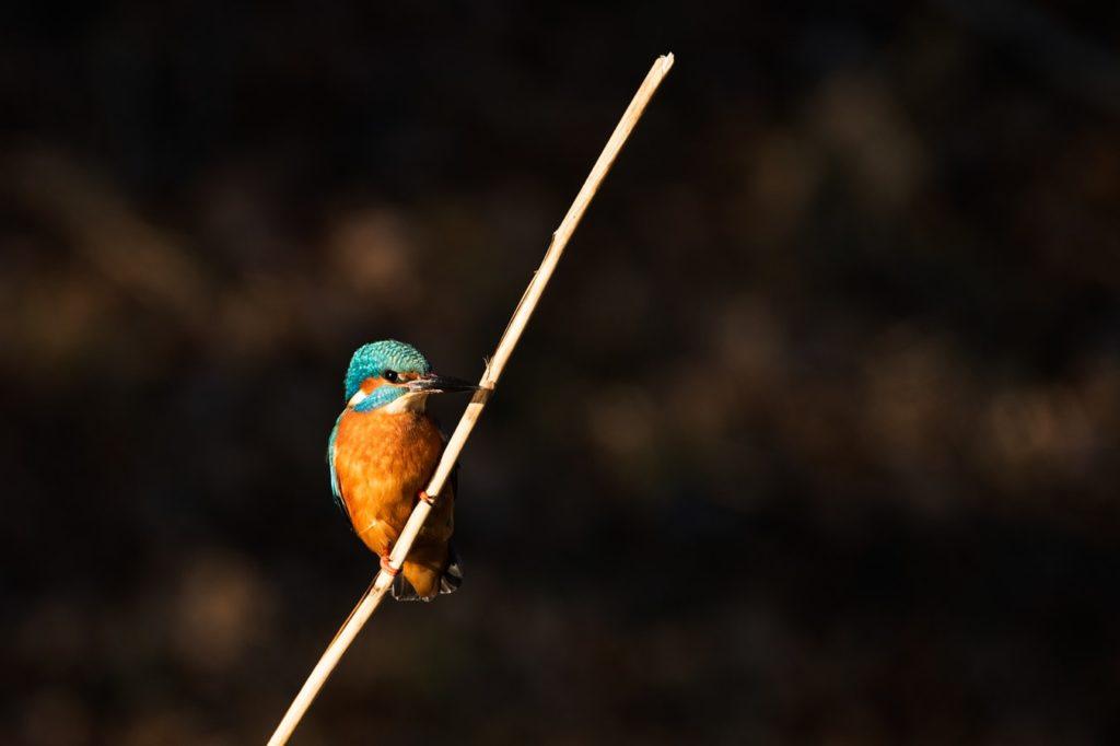 photo by vincent van zalinge