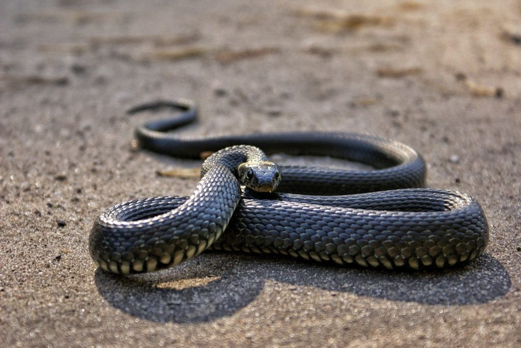 photo of snake on ground