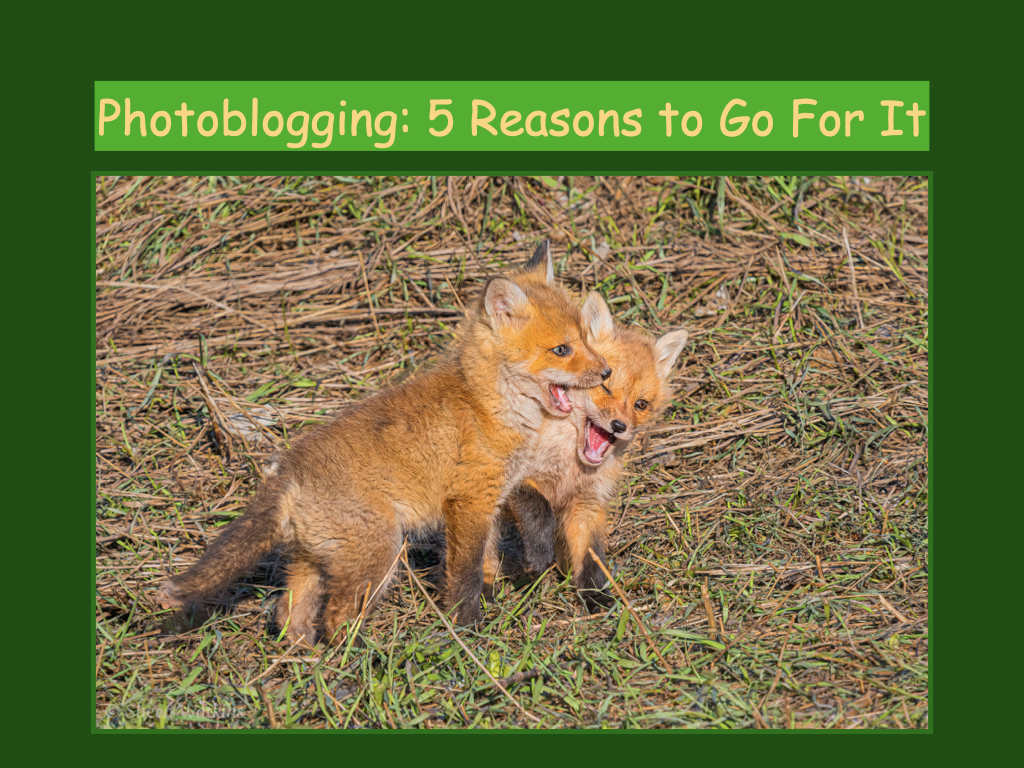 photoblogging 5 reasons to go for it