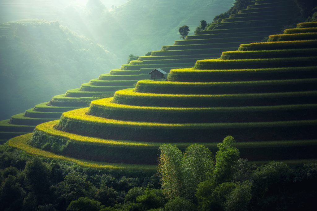 Rice paddy terraces and landscapes
