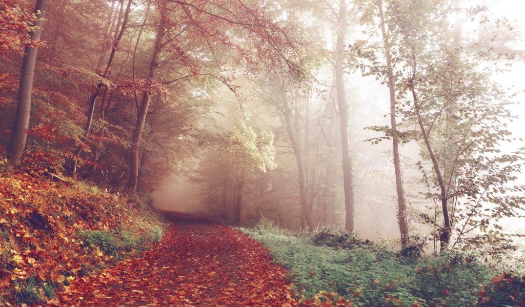 Misty autumn scene