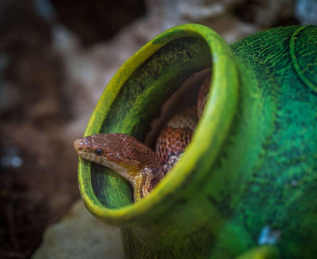 shallow focus photography of brown snake in green jar