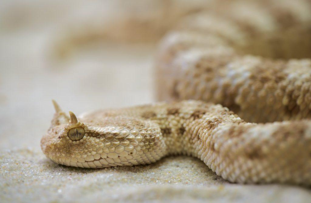snake toxic terrarium