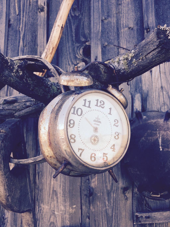alarm clock hanging on branch